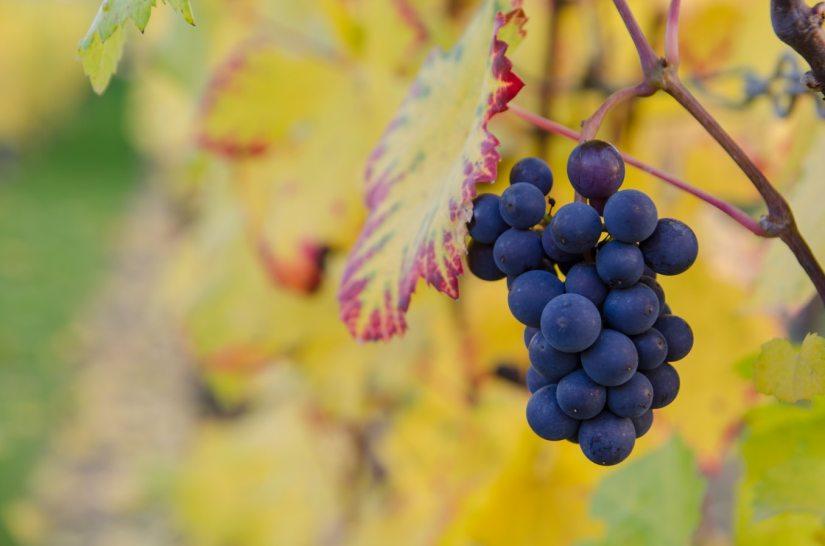 grapes of wrath analysis